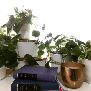 Plants, books and minimalism.   • • • • • #plants #plantsofinstagram #plantsmakepeoplehappy  #plantsplantsplants #plantstyling  #plantlover  #plantlady #books #bookstagram #booklover #bookphotography #bookworm #bookaddict #bookcommunity #booklovers #minimalism #white #styleinspo #gold #igers #picoftheday #instadaily #athens